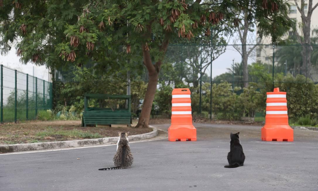 Gatos comunitários. Protetores dizem que grade impede circulação e alimentação dos animais Foto: Pedro Teixeira/21-9-2020 / Agência O Globo