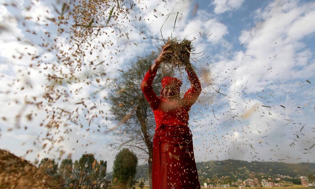 Um agricultor colhe arroz em um campo no Dia Mundial da Alimentação em Bhaktapur, Nepal, 16 de outubro de 2020. REUTERS / Navesh Chitrakar TPX IMAGENS DO DIA Foto: NAVESH CHITRAKAR / REUTERS