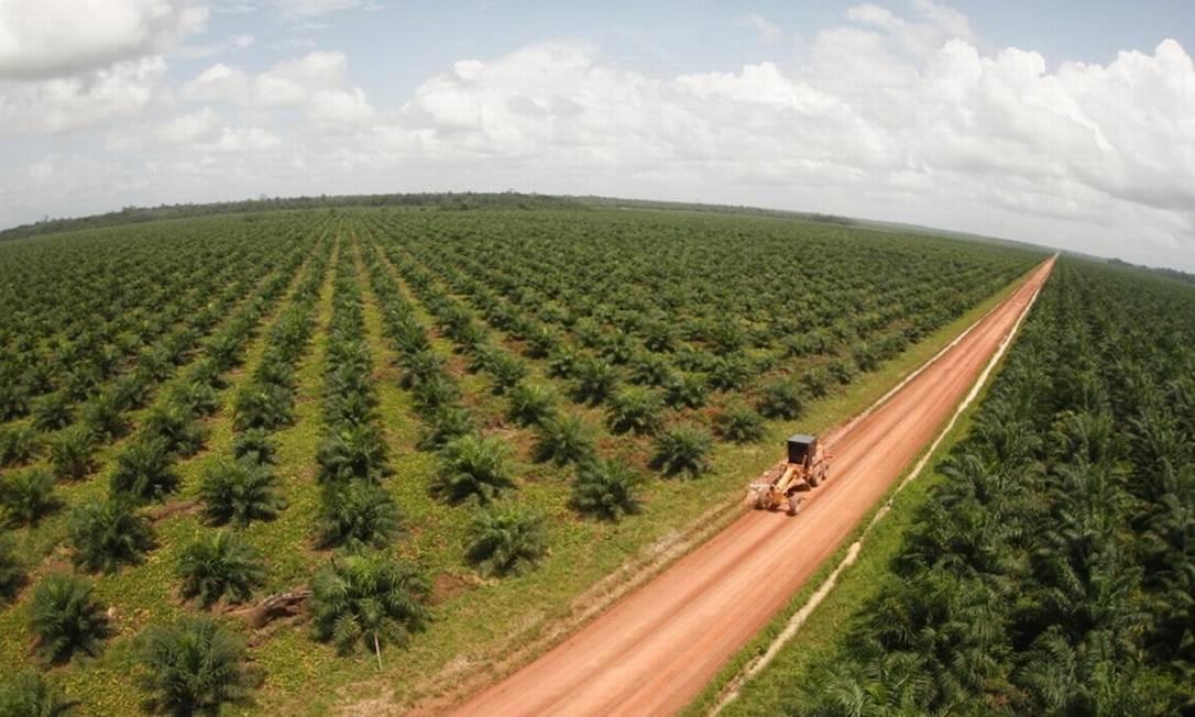 Juiz deu 15 dias para Biopalma da Amazônia desocupar área de produção do óleo de palma Foto: Divulgação/Biopalma