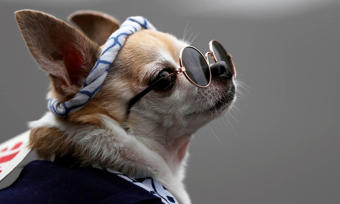 Cachorro usando óculos de sol e traje tradicional do festival Sanja Matsuri, é visto no evento que acontece após meses de adiamento causado pelo surto do coronavírus, no distrito de Asakusa, em Tóquio, Japão Foto: ISSEI KATO / REUTERS