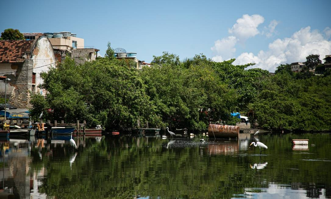 Comunidade pesqueira na Ilha do Governador, onde está a primeira colônia registrada no país Foto: Hermes de Paula / Agência O Globo