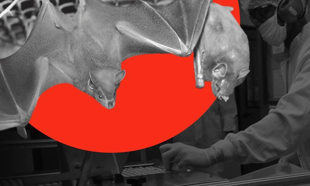 Pesquisadores da Fiocruz usam rede especial para capturar morcegos, que passam por uma série de exames e coleta de secreções antes de serem libertados Foto: Editoria de Arte