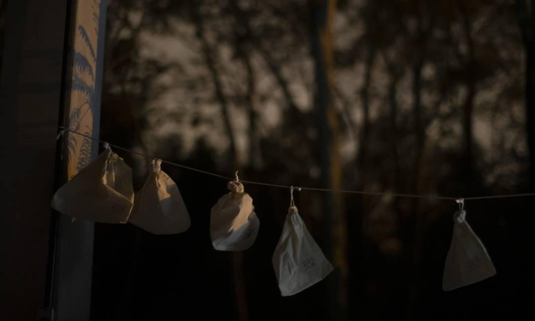 Depois de capturados e colocados em sacos de tecido, os morcegos são pesados, o material é coletado, gravado e liberado Foto: Márcia Foletto / Agência O Globo
