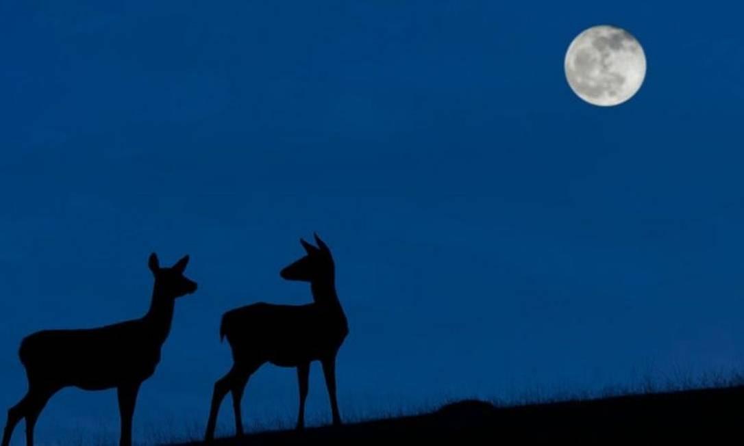 A 'Lua Azul' poderá ser vista na noite de 31 de outubro quando o céu estiver limpo. Foto: Getty Images