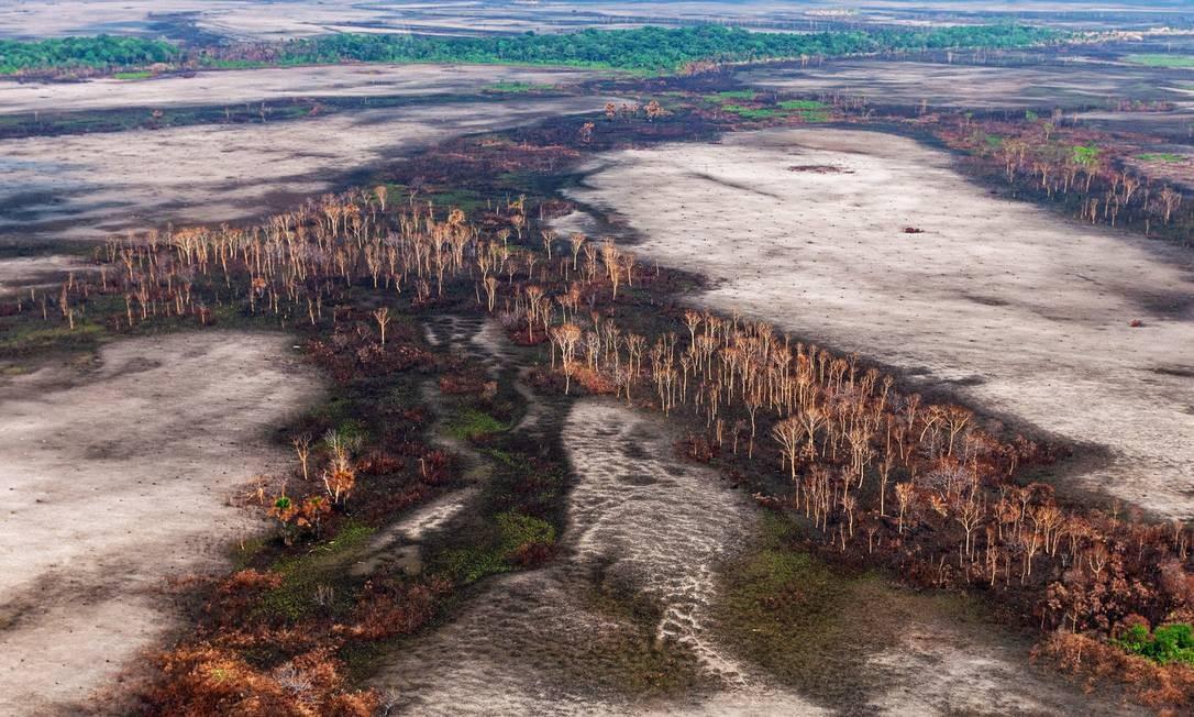 Operação contra desmatamento e queimadas em Rondônia Foto: Vinícius Mendonça/Ibama/29-8-2019