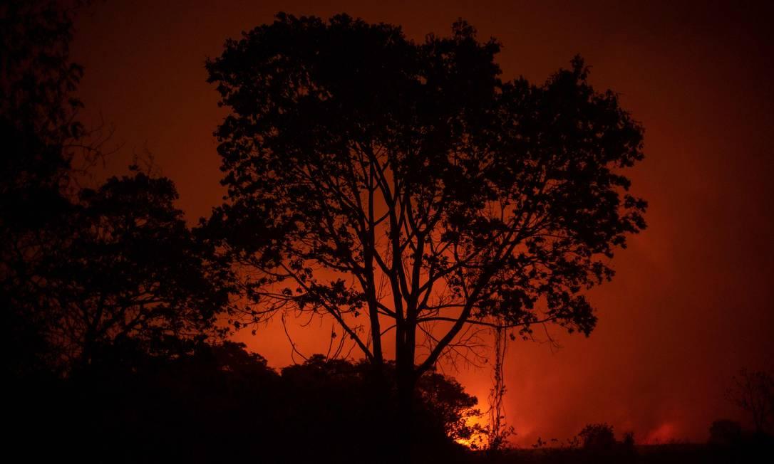 Em 2020, o Pantanal ardeu em chamas, que queimaram a vegetação nativa e mataram e feriram diferentes espécies de animais da região Foto: MAURO PIMENTEL / AFP 12-09-2020