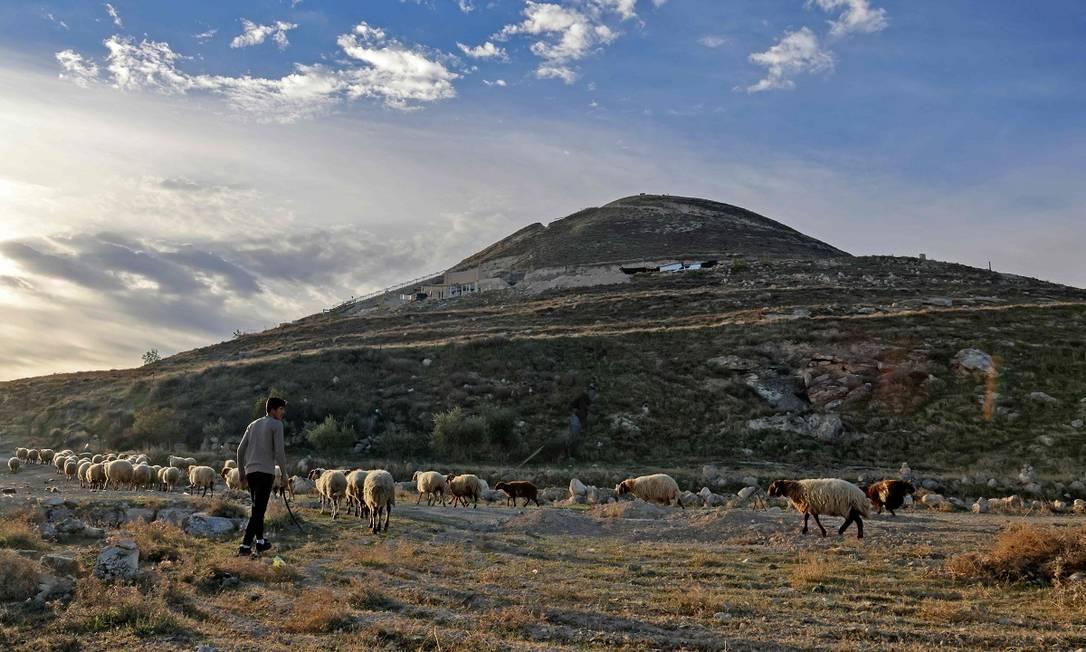 Um pastor palestino conduz suas ovelhas em frente ao antigo palácio Herodium, que foi soterrado por ordem de Herodes e só foi revelado no século XX Foto: MENAHEM KAHANA / AFP