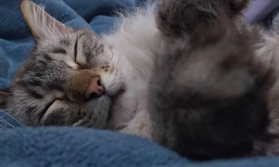 Gatos pegam Covid-19, mas se recuperam muito rápido Foto: reprodução