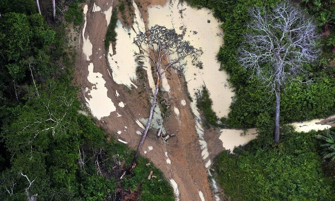 Desmatamento na Amazônia aumenta em novembro e Pará com mais áreas desmatadas Foto: Marizilda Cruppe/Greenpeace
