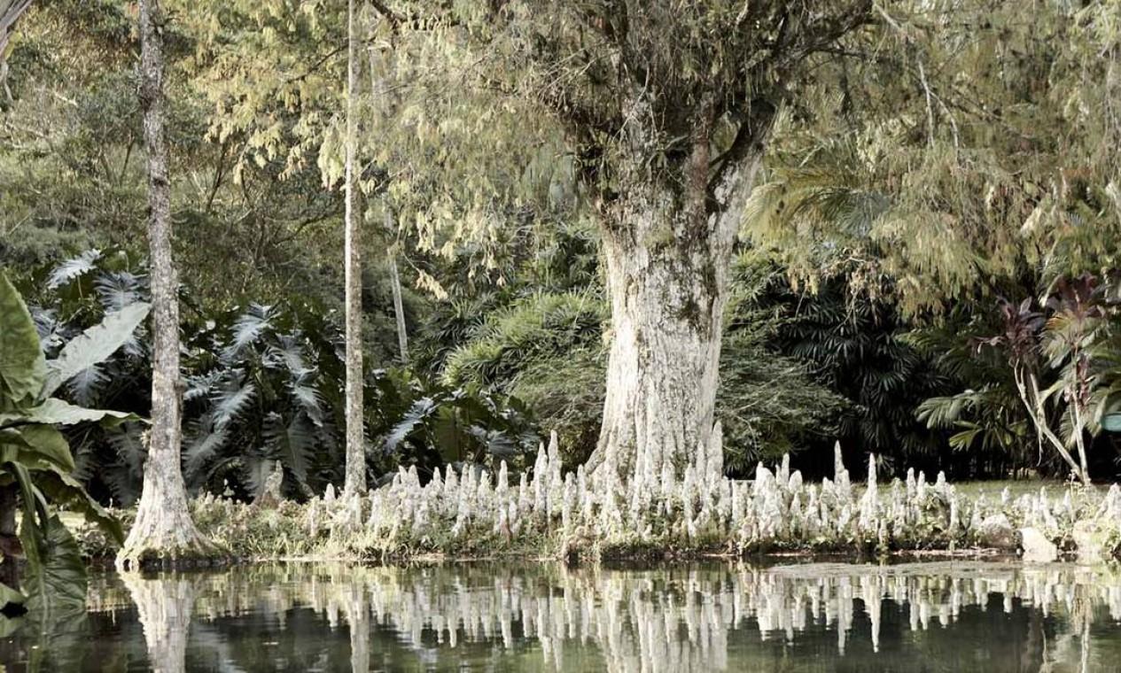 Jardim Botânico nas lentes de Isabel Garcia. Foto: Divulgação / Divulgação
