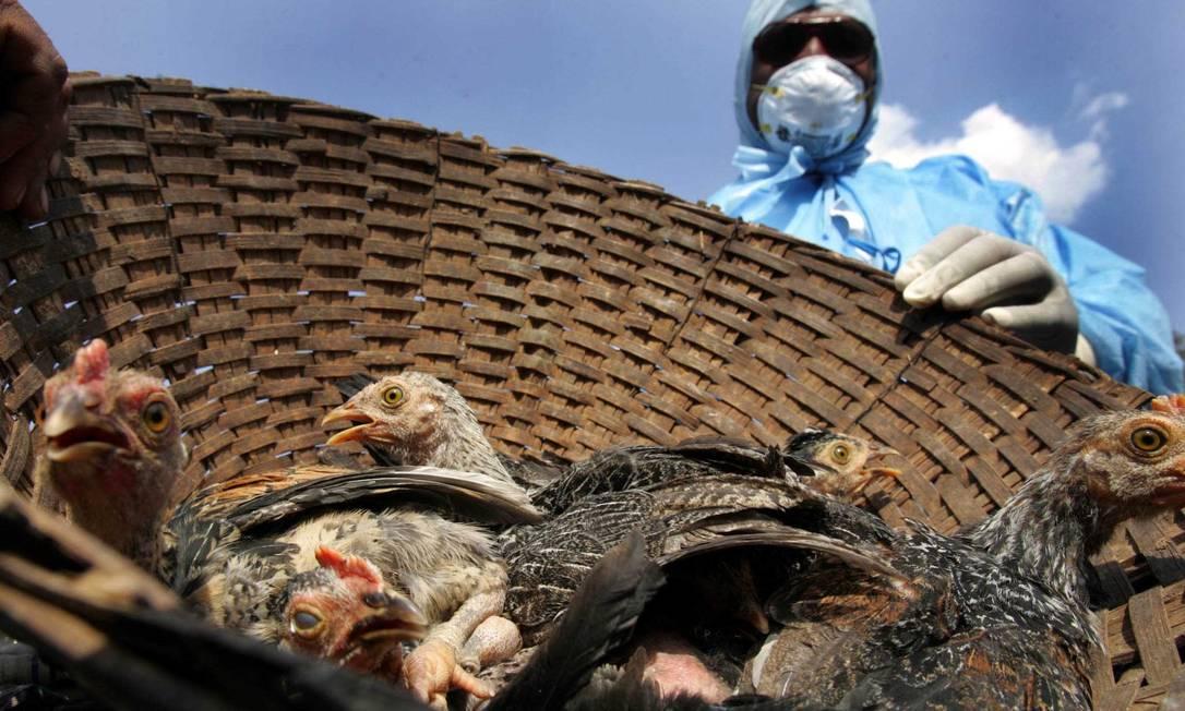 Milhares de aves estão sendo abatidas na Índia devido a surto de gripe aviária no país Foto: Hindustan Times / Hindustan Times via Getty Images