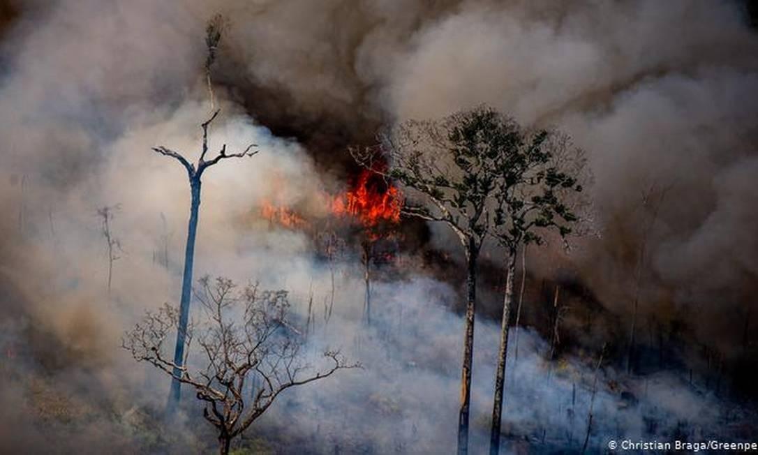 Queimada no Amazonas, em agosto de 2020 Foto: Christian Braga/Greenpeace