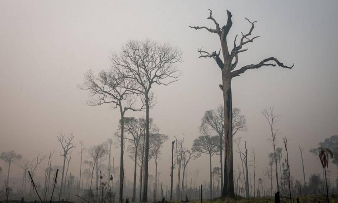 Dossiê classifica governo Bolsonaro como 'o mais agressivo antagonista do meio ambiente brasileiro visto até hoje' Foto: Ibama