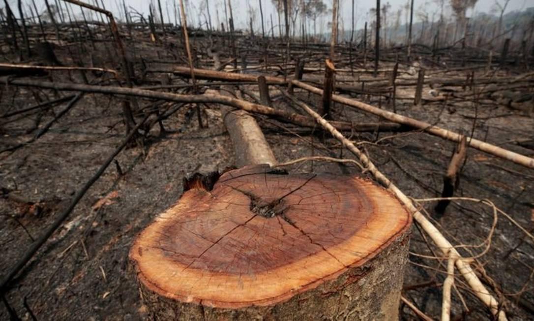 Sob governo Bolsonaro, desmatamento e queimadas na Amazônia aumentaram Foto: REUTERS