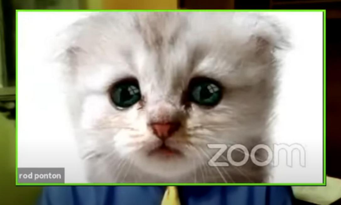 O advogado com o filtro de gato na reunião Foto: Reprodução da internet