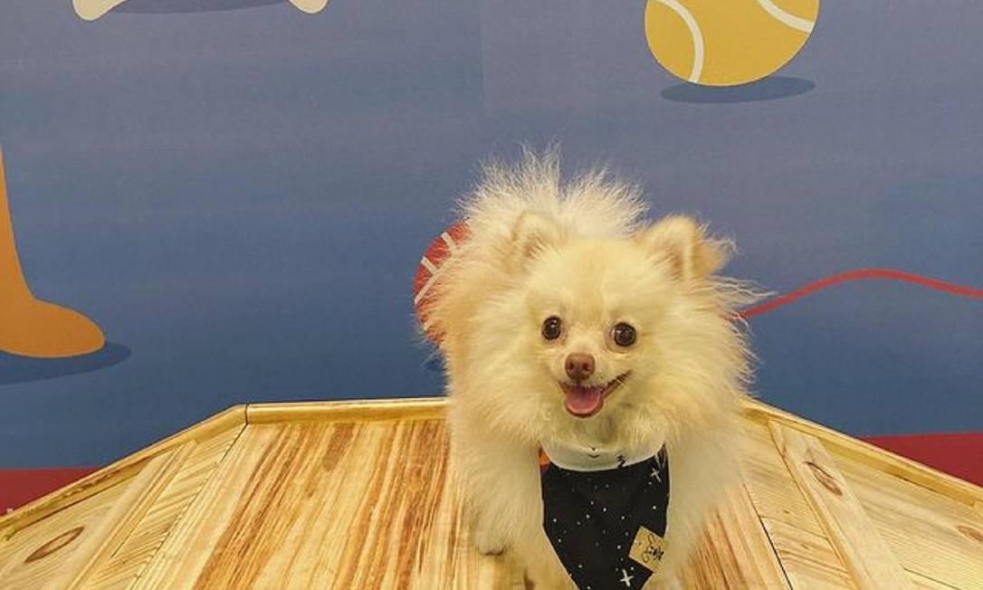 Pets ganham espaço exclusivo no Boulevard Rio Shopping Foto: Divulgação