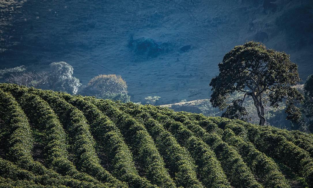 As fazendas de café da serra da mantiqueira abriram as portas para visitação e degustação. Além da bebida, os locais têm belas paisagens Foto: Ricardo Martins