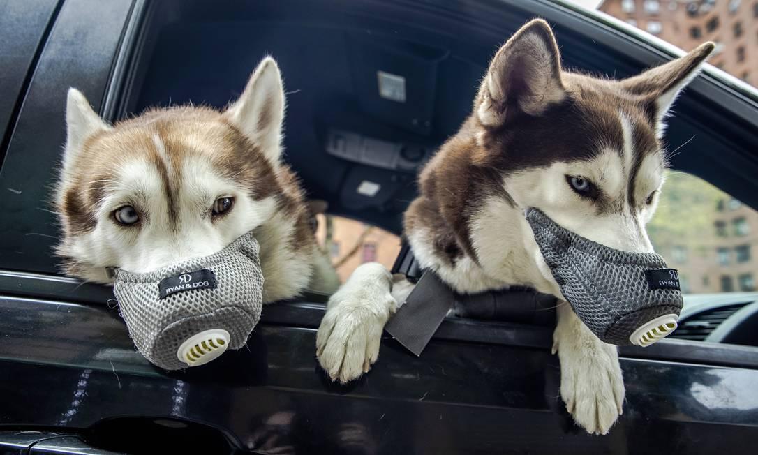 Cães usam máscaras faciais no Lower East Side de Nova York, em abril de 2020, em meio à pandemia de coronavírus Foto: BRITTAINY NEWMAN / The New York Times