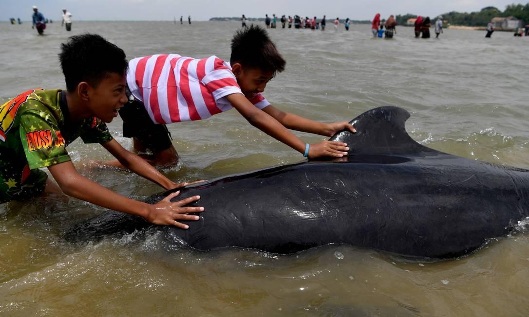Jovens empurram uma baleia-piloto de barbatana curta (Globicephala macrorhynchus), uma das dezenas que ficaram presas em uma praia em Bangkalan perto de Surabaya, província de Java Oriental, Indonésia Foto: ANTARA FOTO / via REUTERS