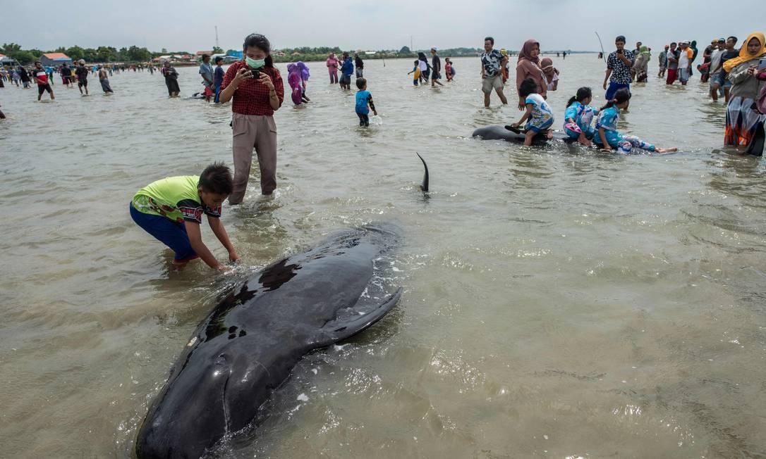 Pessoas tentam salvar baleias-piloto de barbatanas curtas encalhadas em Bangkalan, ilha de Madura Foto: JUNI KRISWANTO / AFP