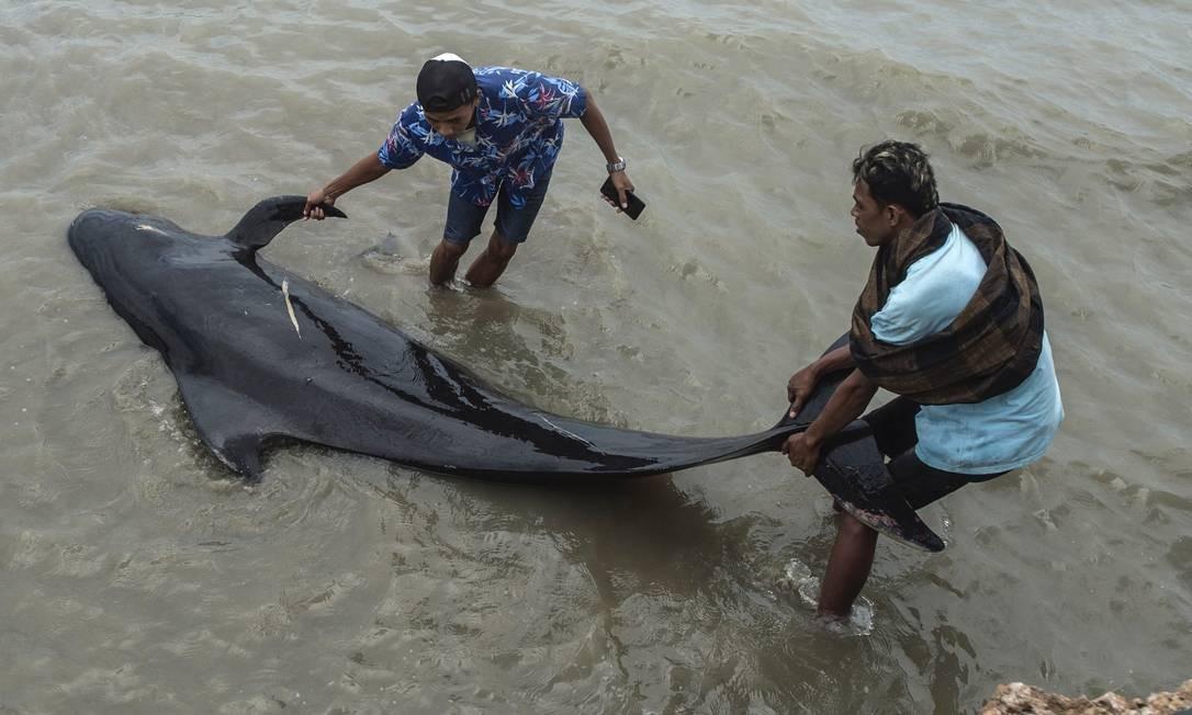 Cerca de 50 baleias-piloto morreram após um encalhe em massa na costa da ilha principal de Java, na Indonésia, que deu início a uma grande operação de resgate Foto: JUNI KRISWANTO / AFP