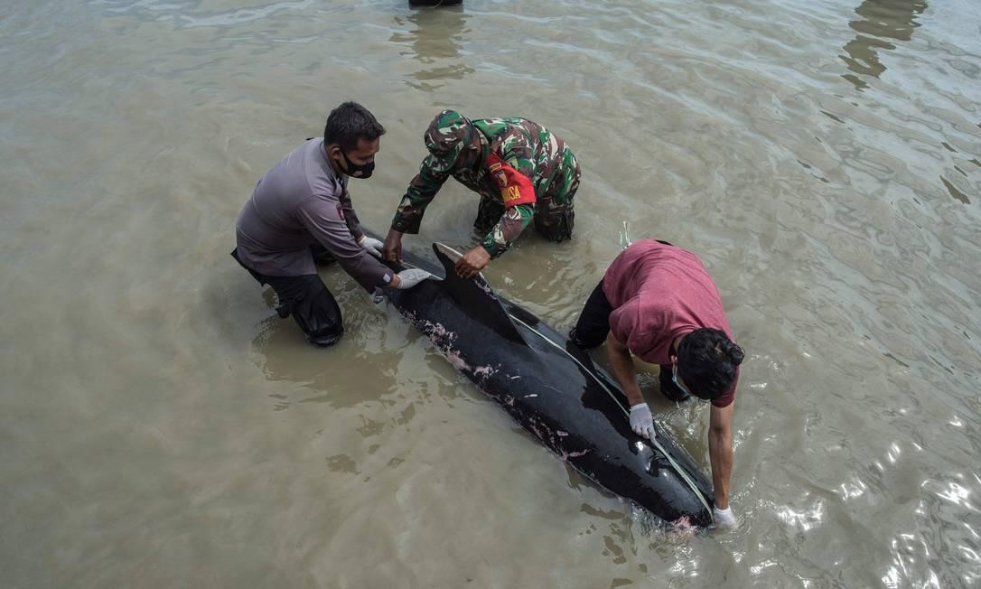 Pessoas tentam salvar uma baleia-piloto de barbatana curta encalhada em Bangkalan, ilha de Madura Foto: JUNI KRISWANTO / AFP