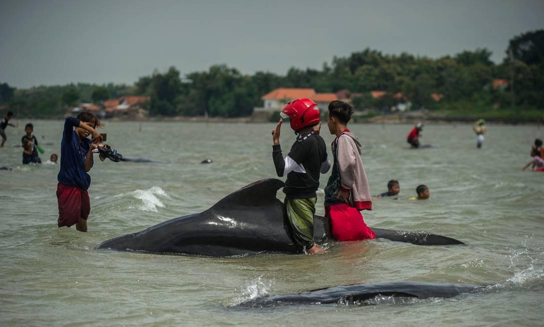 Homem tira uma foto ao lado de uma baleia-piloto de encalhada em Bangkalan, ilha de Madura Foto: JUNI KRISWANTO / AFP