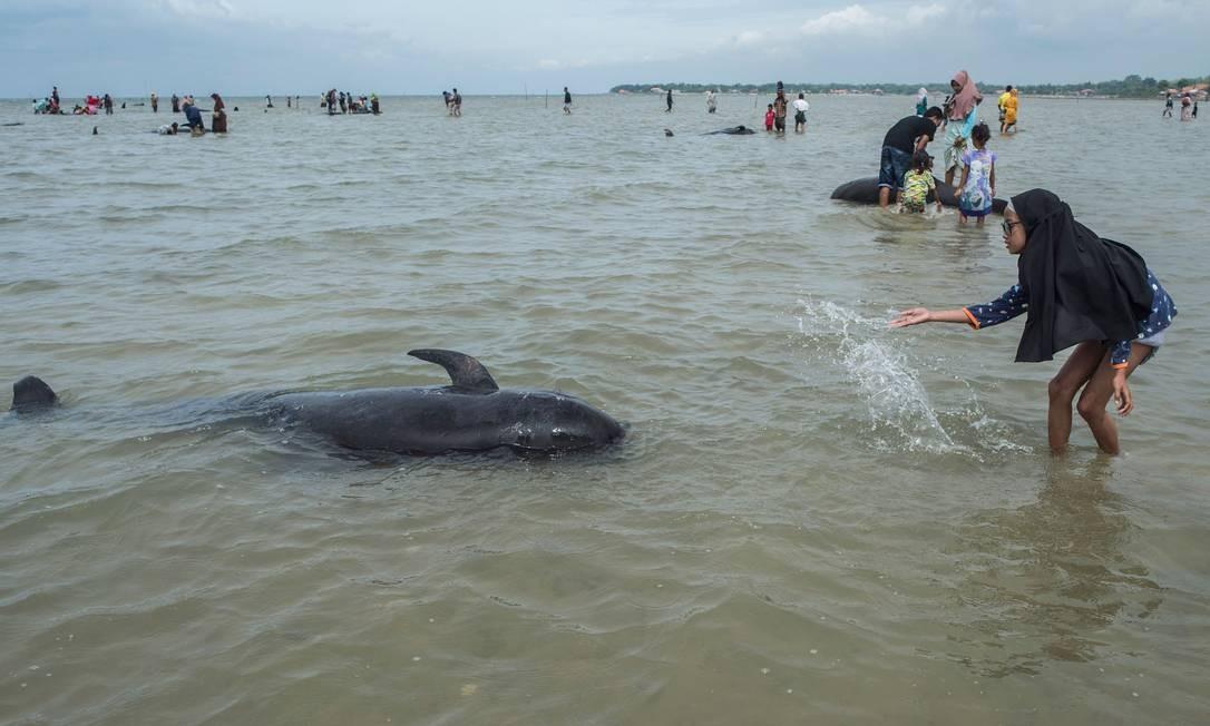 Pessoas tentam salvar baleias-piloto de barbatanas curtas encalhadas em Bangkalan Foto: JUNI KRISWANTO / AFP