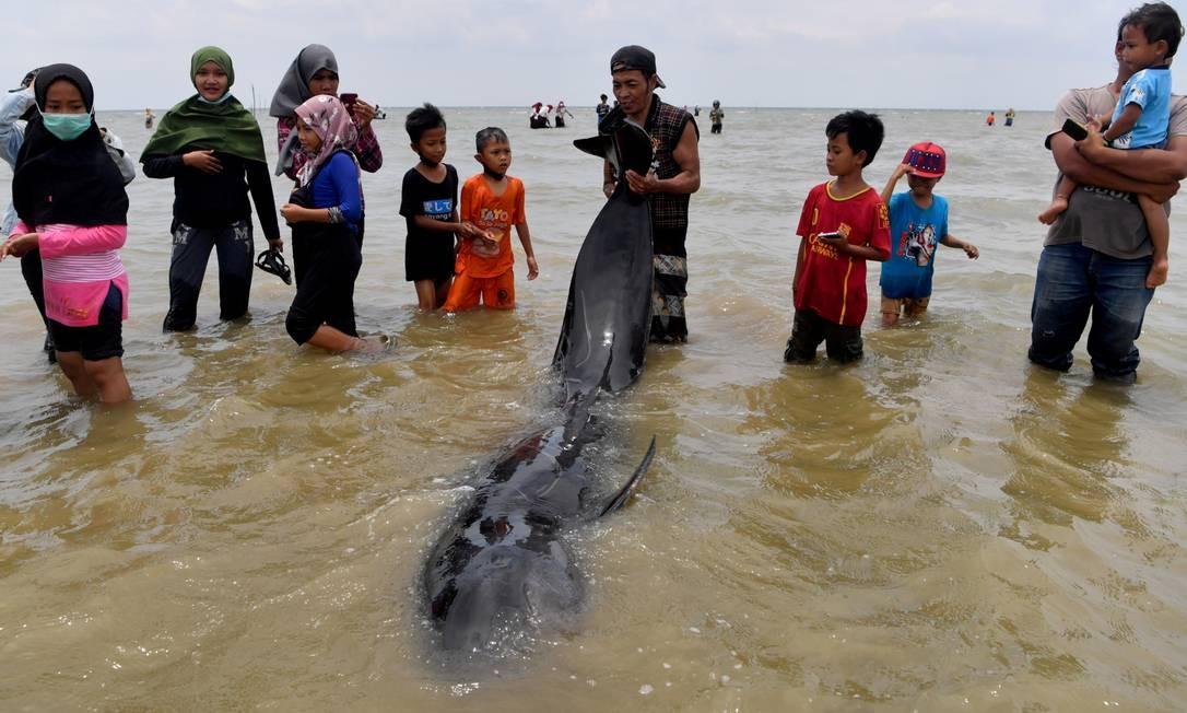 Pessoas tentam salvar baleias-piloto na, ilha de Madura Foto: ANTARA FOTO / via REUTERS
