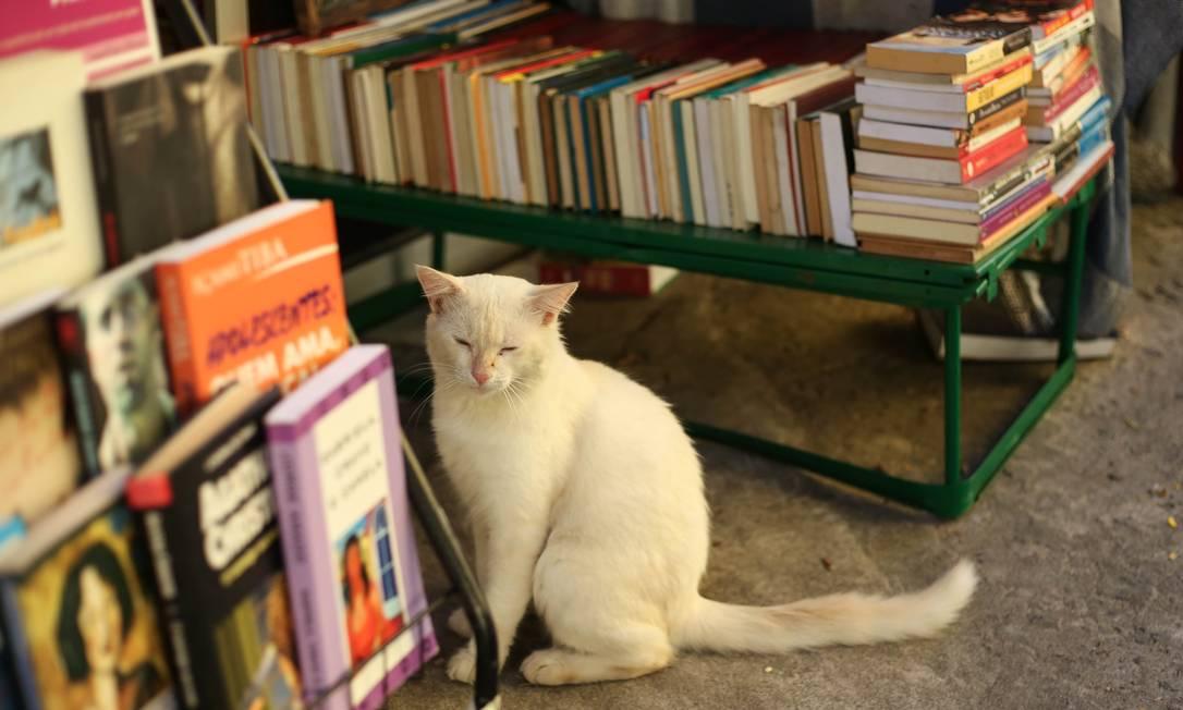 Livraria Belle Époque, no Méier, em 2019 Foto: Gabriela Fittipaldi / O Globo