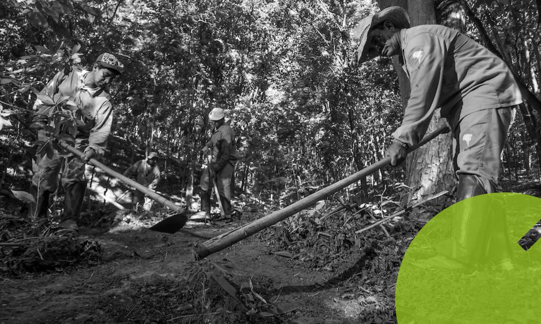 Equipe de projeto de reflorestamento trabalha na reserva particular Fazenda Bulcão, em Aimorés (MG), no vale do rio Doce Foto: Leonardo Merçon / Agência O Globo