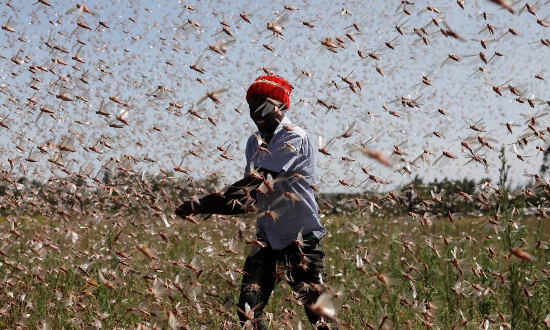 Homem luta contra um enxame de gafanhotos do deserto de uma fazenda, perto da cidade de Rumuruti, no Quênia Foto: BAZ RATNER / REUTERS