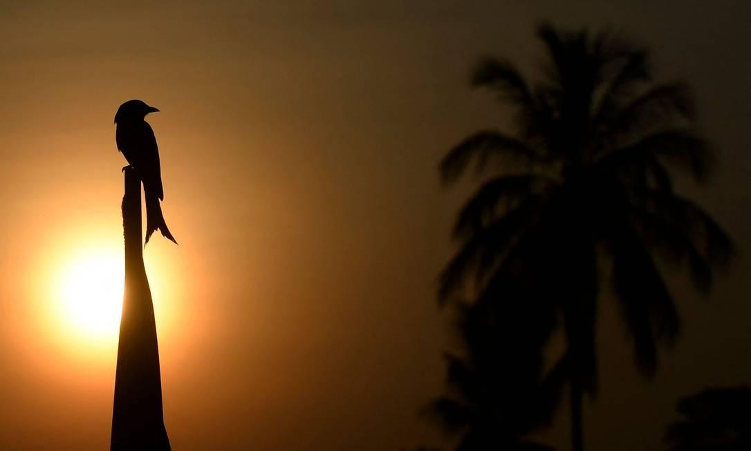 TOPSHOT - Um pássaro pousa em uma cerca enquanto o sol nasce em Piliyandala, nos arredores de Colombo, em 23 de fevereiro de 2021. (Foto: LAKRUWAN WANNIARACHCHI / AFP) Foto: LAKRUWAN WANNIARACHCHI / AFP