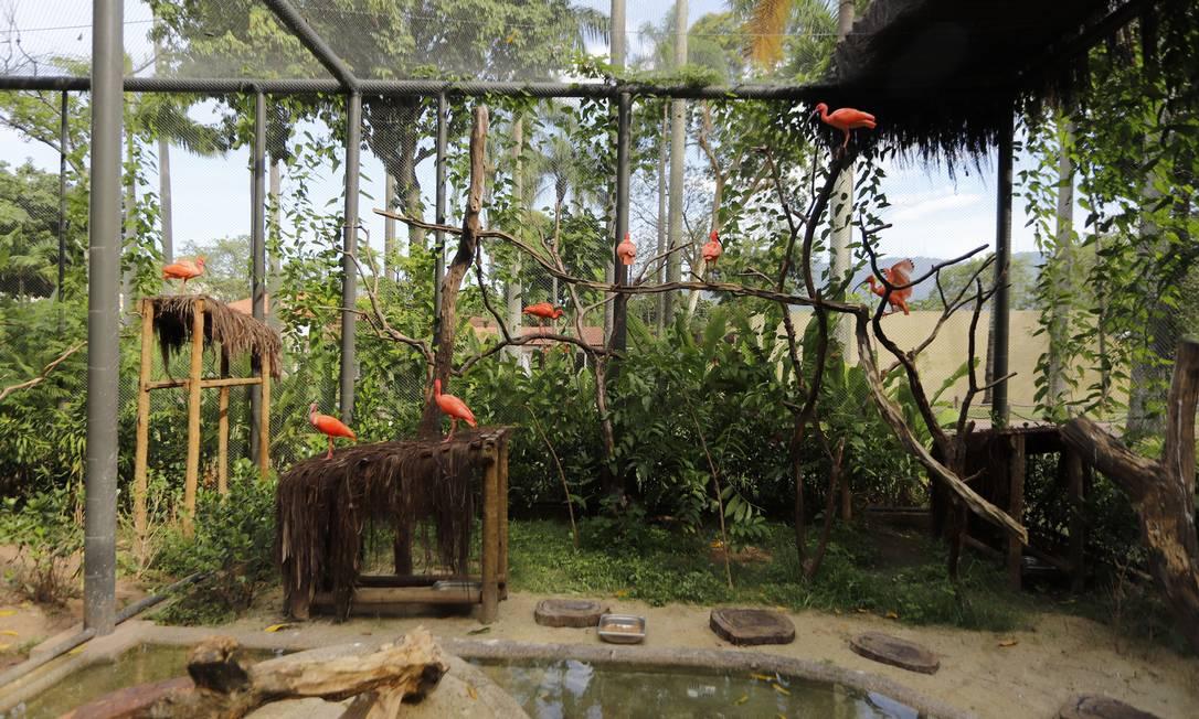 O zoológico está de volta após mais de um ano fechado para obras Foto: Beth Santos / Divulgação