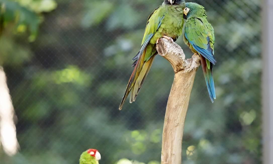 Presente na memória afetiva de boa parte dos cariocas, o zoo do Rio reabre na próxima segunda-feira Foto: Beth Santos / Divulgação
