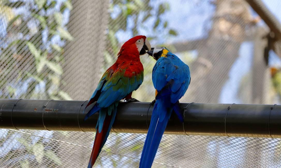 Zoológico do Rio reabre na segunda-feira (22), depois de mais de um ano fechado para obras Foto: Beth Santos / Divulgação