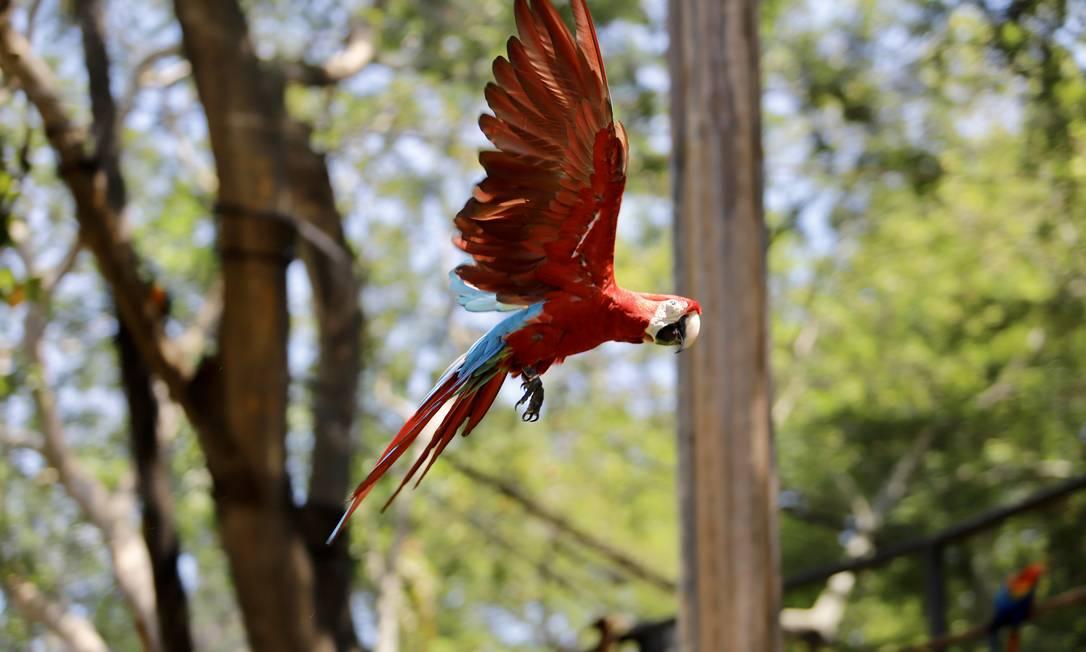 Animais no novo BioParque vivem com mais liberdade Foto: Beth Santos / Divulgação
