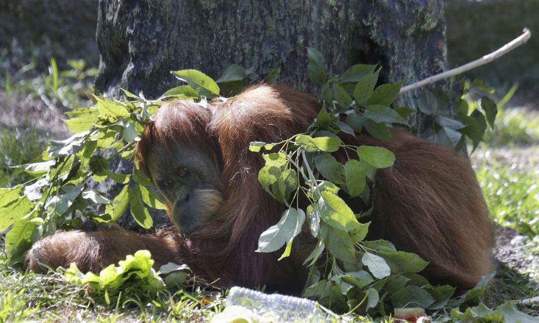 Com a remodelagem do zoológico, a inteção é mais interação entre visitantes e animais em um ambiente de conservação ambiental Foto: Antonio Scorza / Agência O Globo