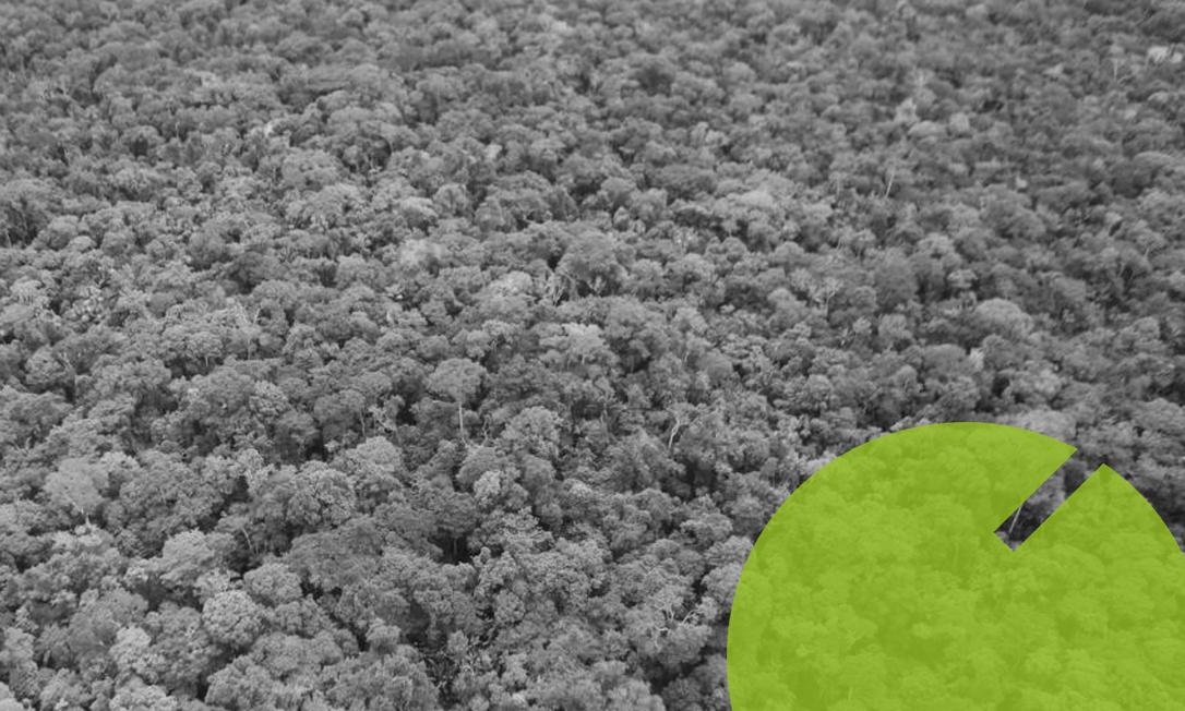 A Floresta Amazônica, entre Tabatiga (AM) e a aldeia Campo Alegre (AM) Foto: Jorge William/Agência O Globo