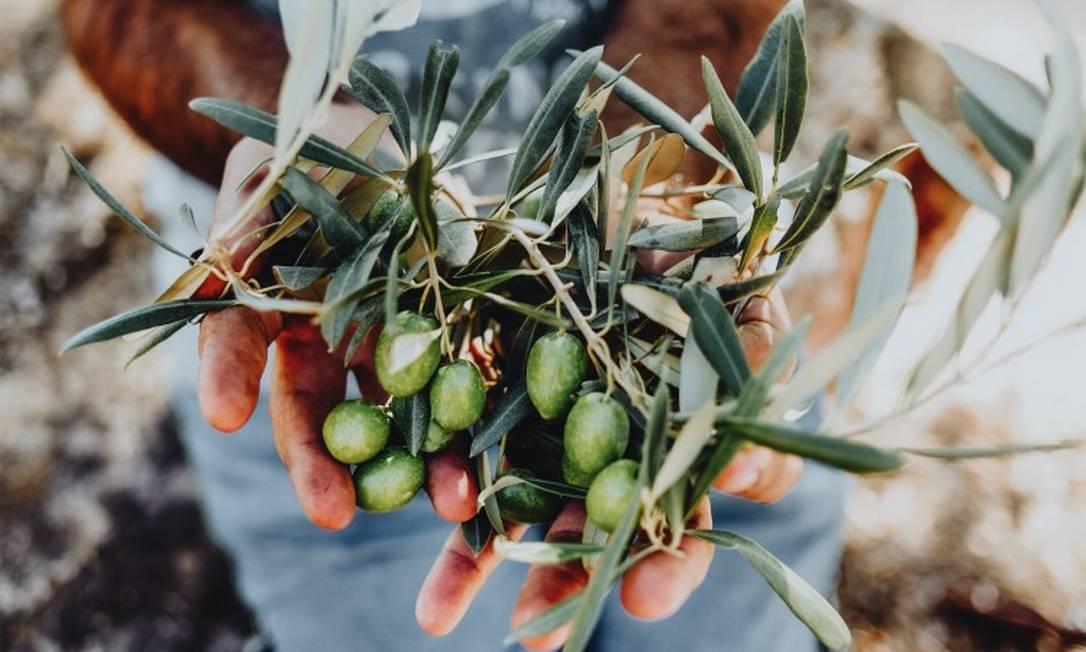 O azeite brasileiro apesar de novato (coisa de dez anos) acumula 70 prêmios internacionais relevantes Foto: Shutterstock