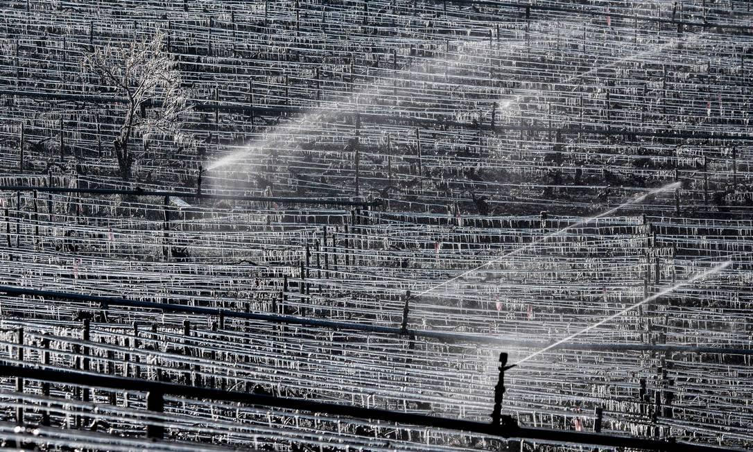 Água é pulverizada na vinícola Daniel-Etienne Defaix perto de Chablis, Borgonha, depois de noite com temperatura abaixo de zero grau Foto: JEFF PACHOUD / AFP