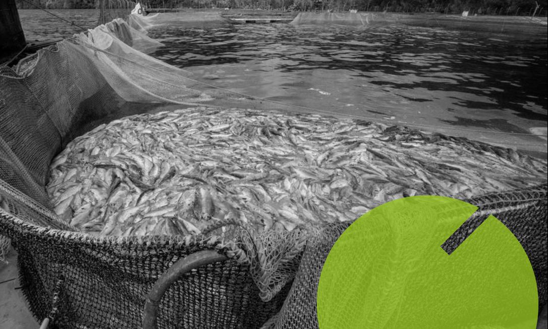 Fazenda de salmão em Palena, no Chile: mortalidade recorde (10/04/2021) Foto: ALVARO VIDAL / AFP