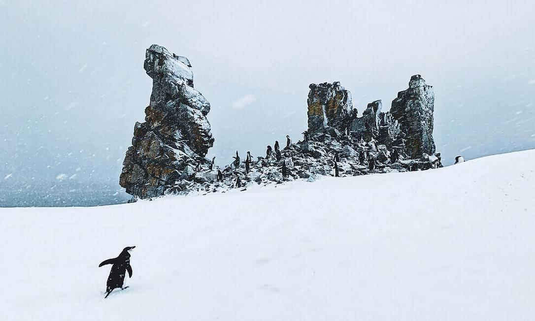 Pinguim caminha em direção a sua colônia durante uma tempestade de neve, na Ilha Meia Lua, na Antártica Foto: John Bozinov / Shackleton/Divulgação