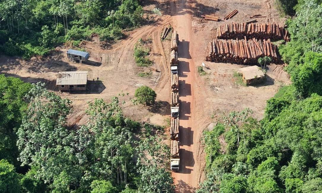 Toras de madeira nativa apreendidas na Operação Handroanthus Foto: Divulgação/PF