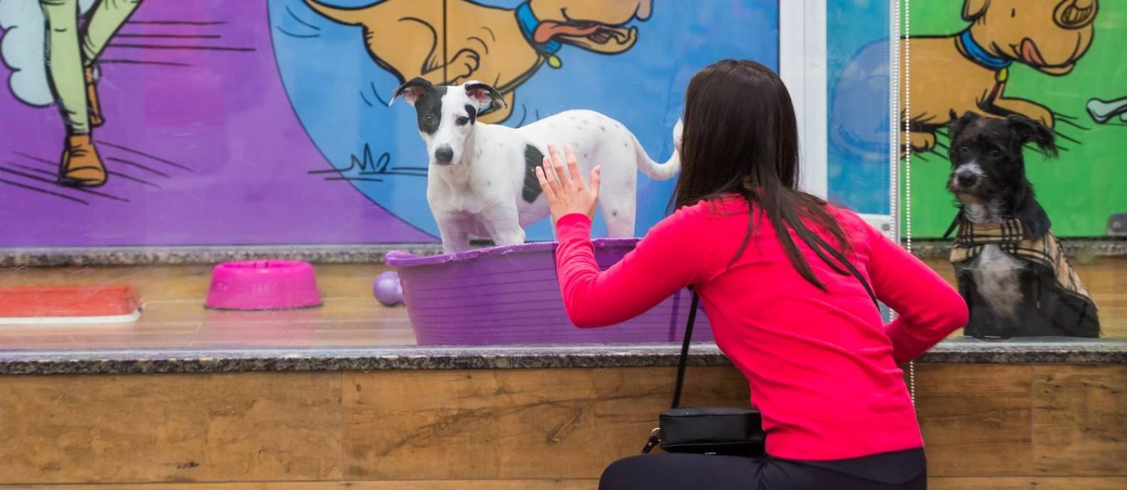 Fernanda Oening, de 24 anos, escolhe um cachorro para adoção numa Loja da Petz em São Paulo Foto: Agência Globo / Edilson Dantas