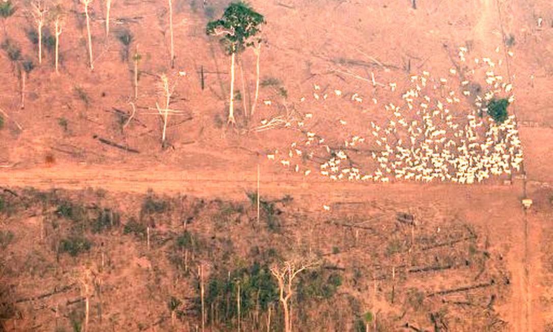 No estado do Mato Grosso, área de floresta foi queimada para abrir espaço para o gado Foto: VICTOR MORIYAMA / NYT/31-8-19