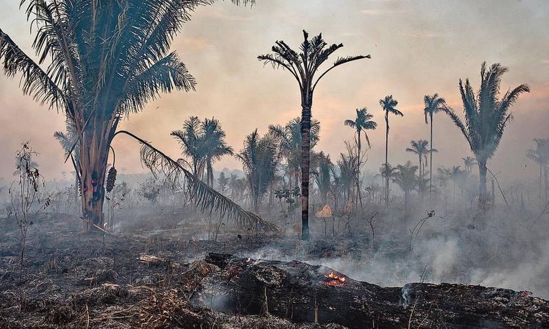 Área na borda da floresta, em Mato Grosso, é queimada: Imazon indicou o pior mês de março em dez anos, com 810km2 de desmatamento Foto: Victor Moriyama/NYT/1-9-2019