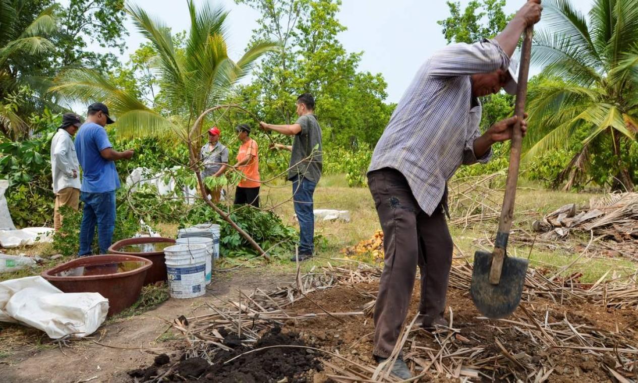 Migrantes da América Central trabalham em um composto para criar material orgânico a ser usado como fertilizante para plantas Foto: JOSE TORRES / REUTERS