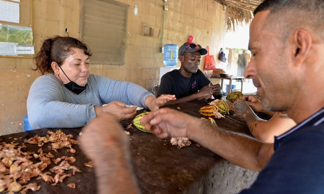 """Migrantes de Honduras e Haiti selecionam sementes de cacau para oiprograma """"Semeando vidas"""", poderia gerar 1,2 milhão de empregos, de acordo com o presidente mexicano Andrés Manuel Lopez Obrador com aporte solicitado ao presidente dos EUA, Joe Biden, na Cúpula Climática Foto: JOSE TORRES / REUTERS"""