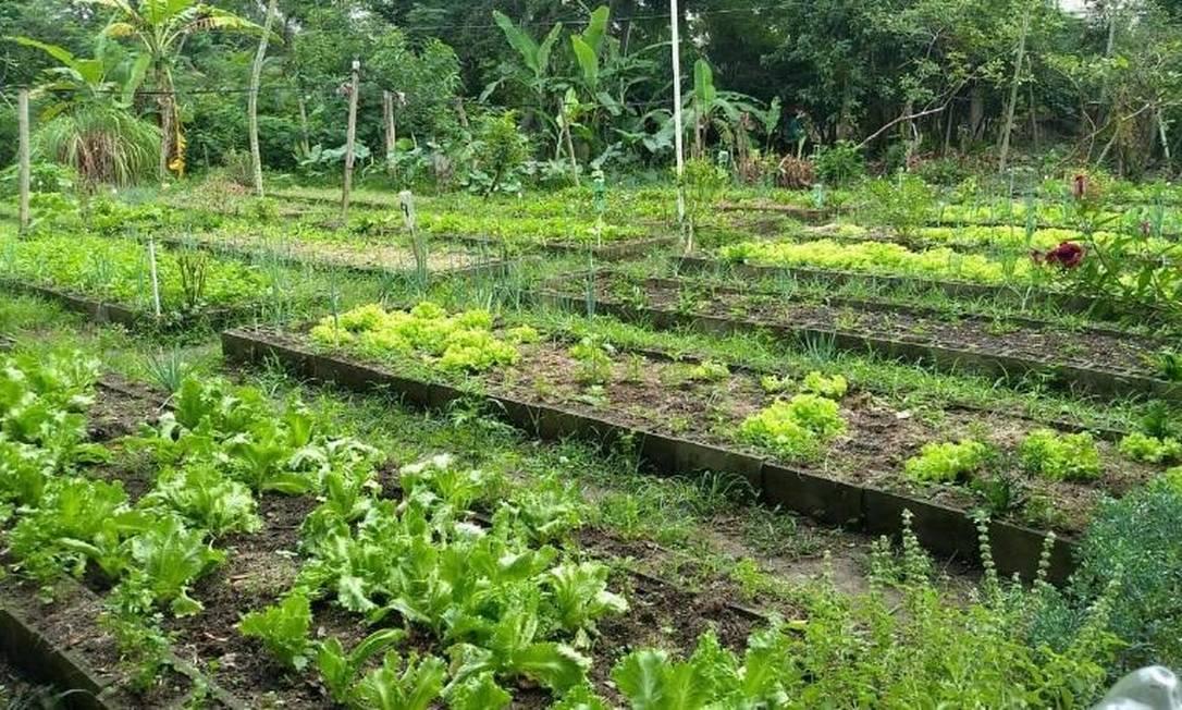 A Horta Dirce Teixeira, no Anil, fornece mudas para as outras unidades do programa Foto: Divulgação